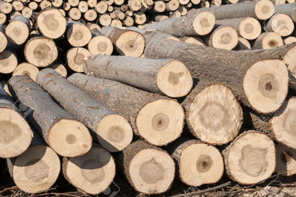 Schneiden Sie Ihr eigenes Holz