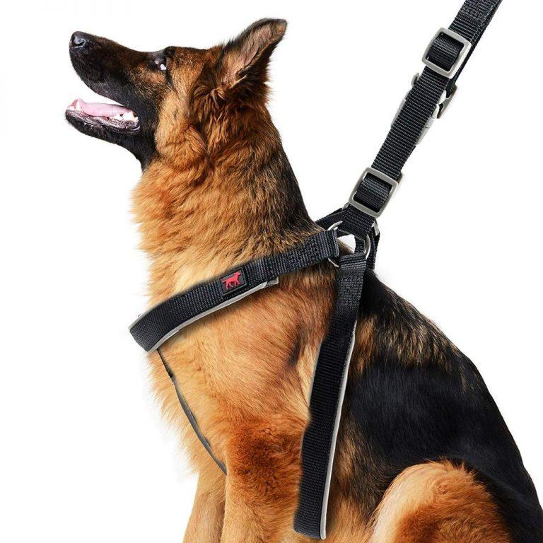 Machen Sie eine richtige Auswahl an Hundegeschirr für Ihr Haustier!